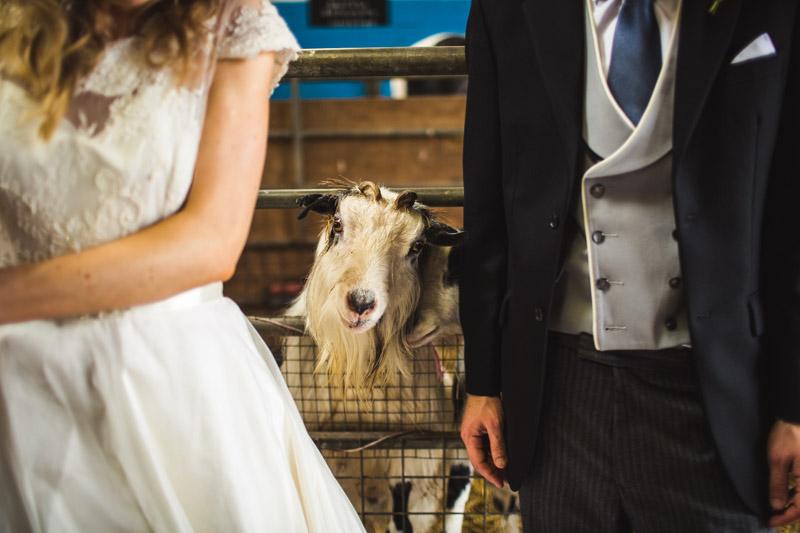 animal wedding Whirlow Farm Wedding