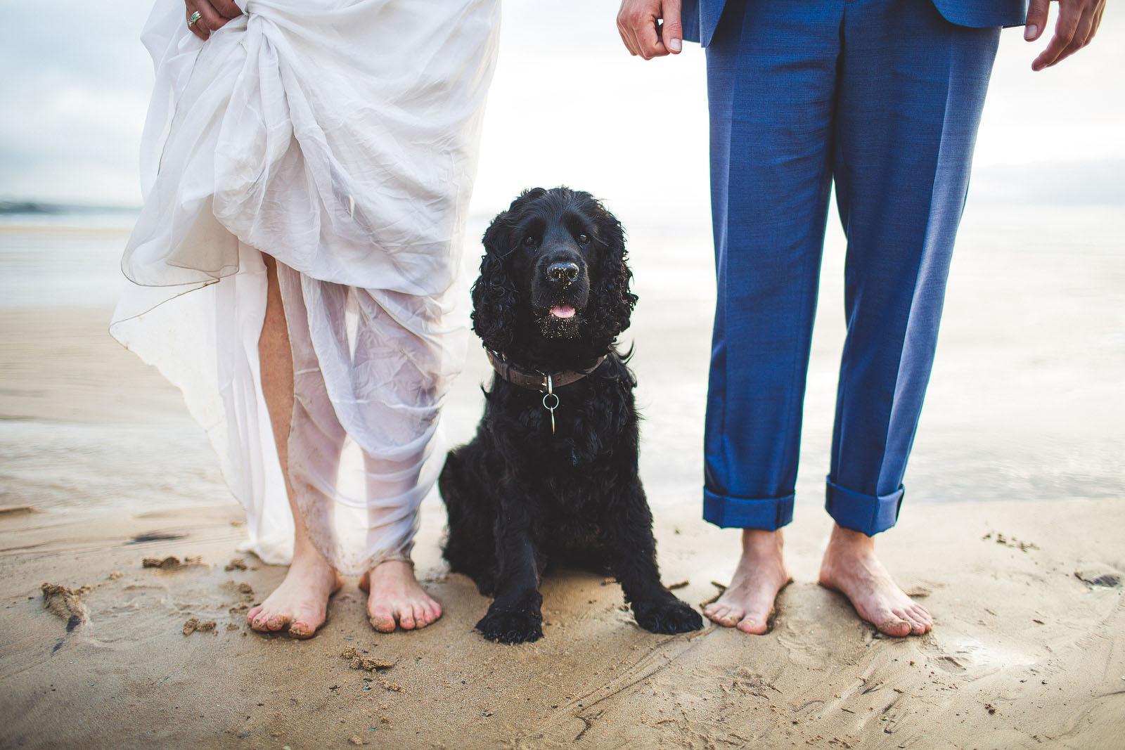 amazing pet wedding photos1