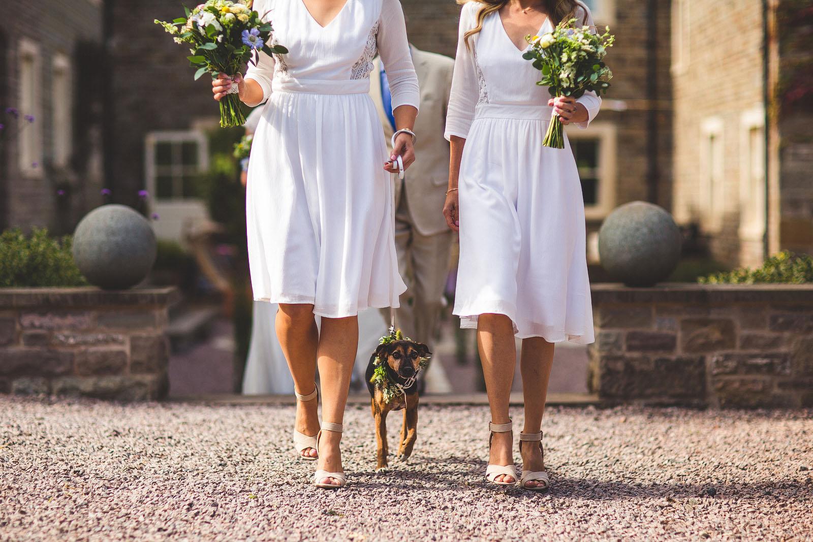 bridesmaid dog1